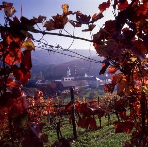 Pleterje through the vines.jpg
