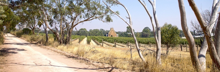 Vineyard_and_Church-web.jpg