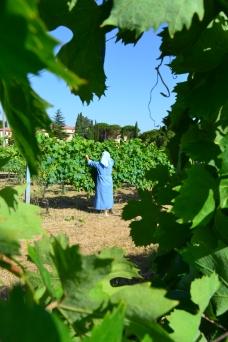 Sister pruning vines