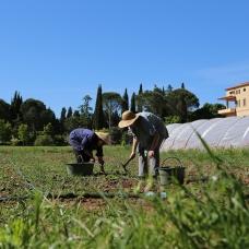 Vitorchiano sisters gardening