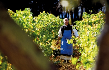 Monk in vineyard